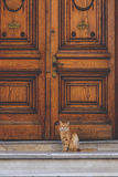 Street cat. Cute street cat sitting in front of an old wooden ornate door Stock Photography