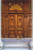 Street cat. Cute street cat sitting in front of an old wooden ornate door Stock Photo