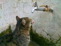 Street cat Stock Images