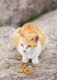 Street cat eating food Royalty Free Stock Photography