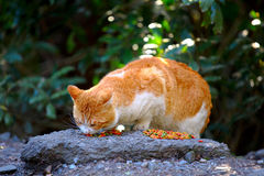 Street cat eating food on rock Royalty Free Stock Image