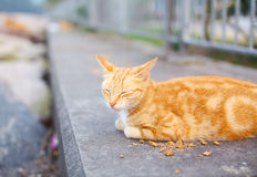 Street cat eating food Royalty Free Stock Photos