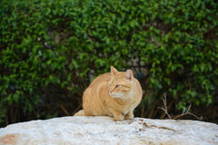 Street cat eats food on the rock Stock Photos