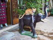 Street cat on elephant. In chiang mai royalty free stock images