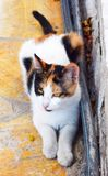 Street Cat in Europe Royalty Free Stock Image