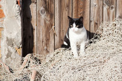 Street cat on a fishing net Stock Photography