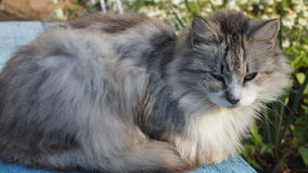 Street cat. Fluffy gray cat lying on the bench Stock Image