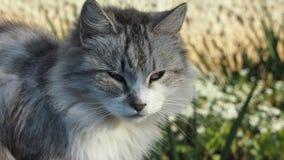 Street cat. Fluffy gray cat lying on the bench Stock Photo