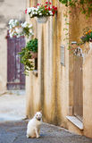 Street with cat in French Provence Royalty Free Stock Photography