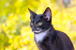 Street cat gazing at the camera. Black street cat gazing at the camera Royalty Free Stock Photo