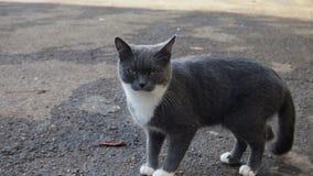 Street cat. Gray cat posing for the camera Stock Photos