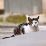 Street cat Stock Photos