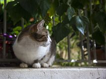 Street cat in front of a fence with leaves royalty free stock photos