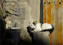 Street cat in a house entrance in a Catalonian village, Spain. White cat sunbathing on a tree trunk in front of a village house Stock Image