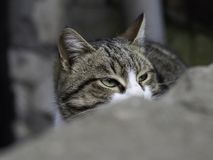 Street cat at a hunting moment focused stock photo