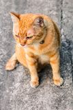 Street cat isolate on background,front view from the top stock image