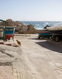 Street cat at Lapsi, Malta. Traditional maltese boats Stock Photos