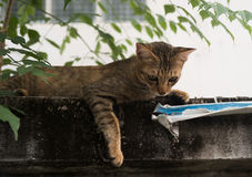 Street cat lay down on cement wall Stock Photo
