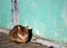 The street cat is basking in the sun. The street cat lies near the wall and is sunning in the sun Royalty Free Stock Photo