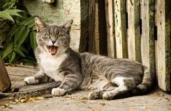 Street cat lies on a sidewalk Stock Image