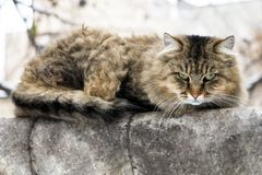 Street cat is cold in winter stock photo