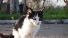 Street cat. Little kitten looking for a host Stock Images