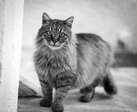 A street cat looking at camera Stock Photography