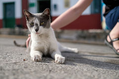 Street cat looking at camera Stock Images