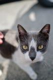Street cat looking at camera Royalty Free Stock Photos