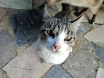 Street cat looking up. Caught this fellow on photo while passing, such a cute and friendy cat Stock Photos