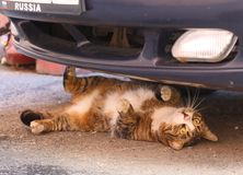 Street cat lying under the car royalty free stock photography