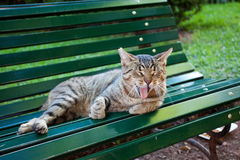 Street cat outdoor Royalty Free Stock Image