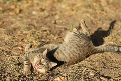 Stray Cat Photographer new photo, small tiger cat relax. Daily street cat photo. small tiger cat relax on grass All of my cats photos are from street cats, they stock image