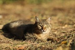Stray Cat Photographer new photo, small tiger cat relax. Daily street cat photo. small tiger cat relax on grass All of my cats photos are from street cats, they stock photo