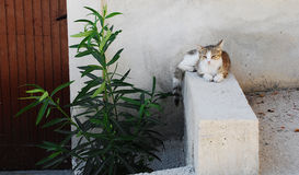 Street Cat in Pican Stock Image