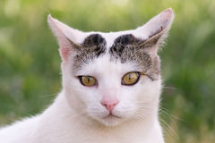 Street cat portrait. A beautiful close up look Royalty Free Stock Photo