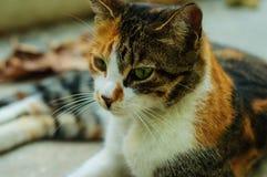 Street Cat Portrait Stock Image