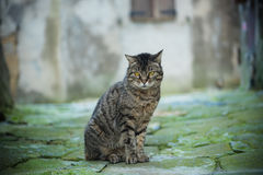 Street cat portrait Royalty Free Stock Photography
