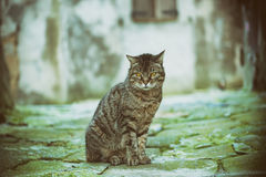 Street cat portrait Royalty Free Stock Images