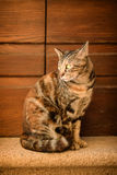 Street cat portrait Stock Photography