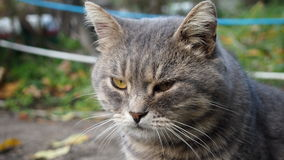 Street cat. Predatory cat looks into the distance Stock Photography