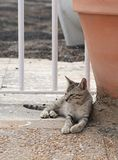 Street cat. Relaxing cat, cat resting in a shadow, sleeping cat in the street on sunny day, lazy cat in the street, lazy cat on da Royalty Free Stock Photos