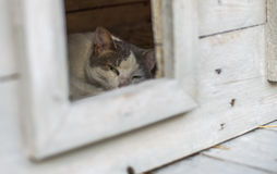 Street cat relaxing in shelter Royalty Free Stock Image