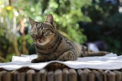 A street cat resting. Royalty Free Stock Photos