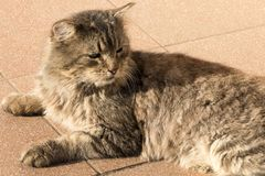 Old street cat resting on the sidewalk. royalty free stock images