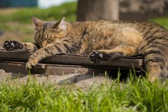 Street cat is resting on a warm sunny day. stock photography