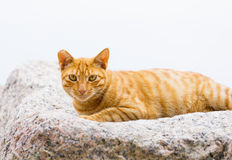 Street cat on rock Stock Photo