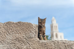 Street cat in Santorini Greece Stock Images