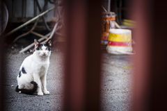 Street cat Royalty Free Stock Photo