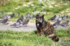Street cat sit near pigeons at park Stock Photos